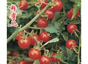 樱桃番茄种子