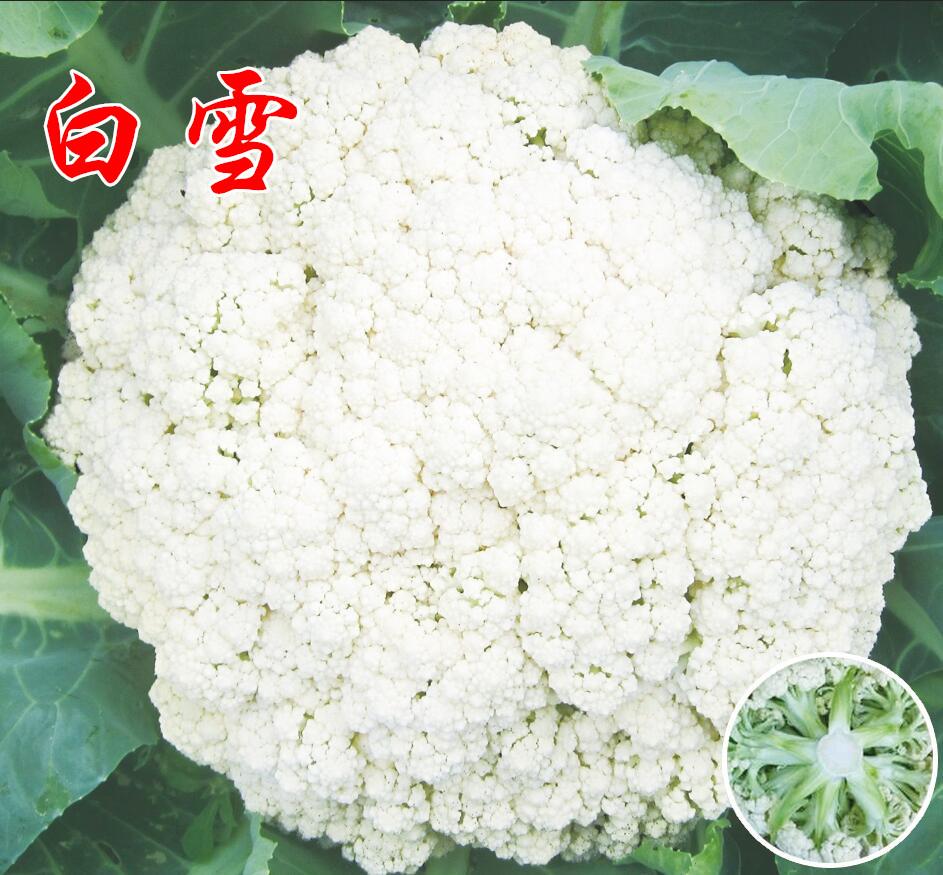 松花菜种子【白雪】